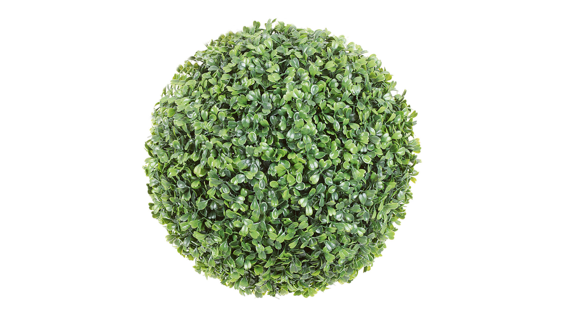 Diese Grünpflanze ist ein abso...