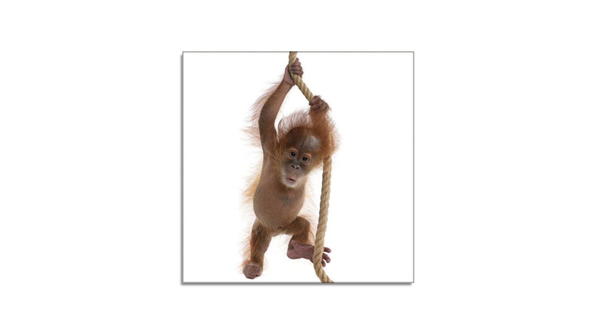 Glasbild Little Monkey I, 4 mm Floatglas mit Motiv, ca. 30 x 30 cm ...