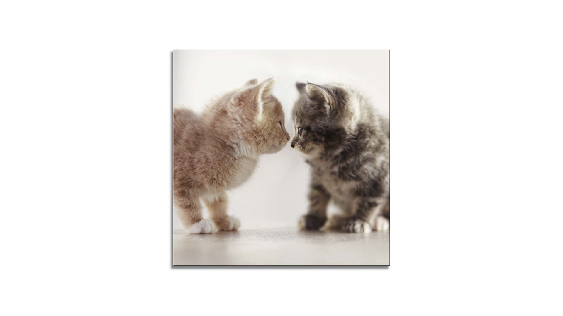 Glasbild Ars graphica aus Glas in Beige Glasbild Two Cats 4 mm Floatglas mit Motiv - ca. 30 x 30 cm